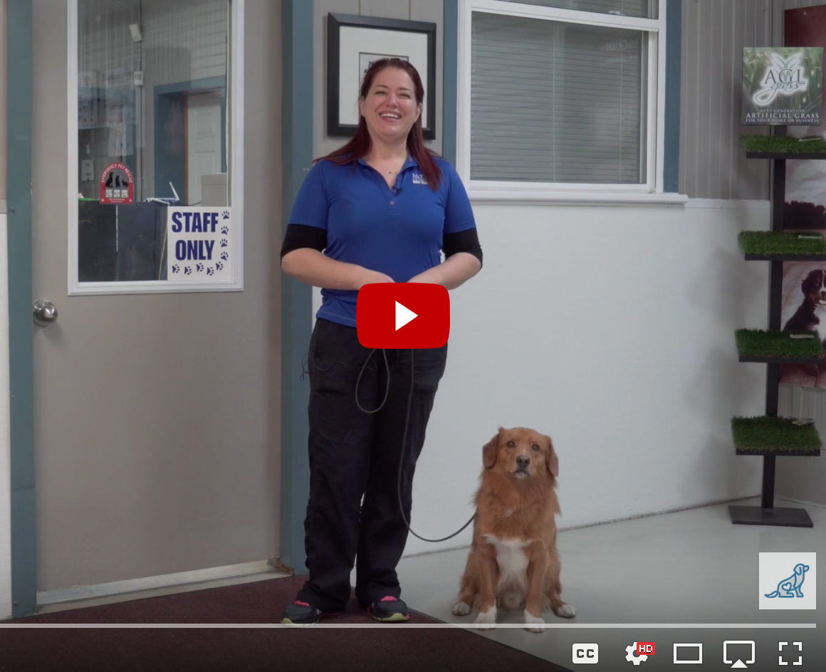 Teach your dog manners with McCann Professional Dog Trainers